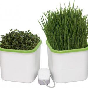 Проращиватель семян, зерен и микрозелени 2-х модульный с компрессором