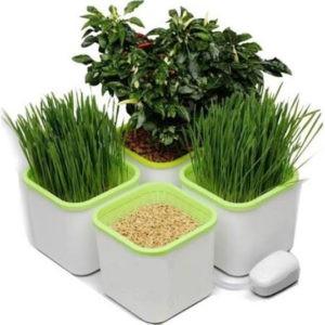 Проращиватель семян, зерен и микрозелени 4-х модульный с компрессором