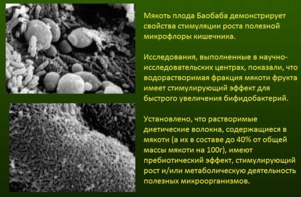 Порошок из плодов баобаба Органик 200г