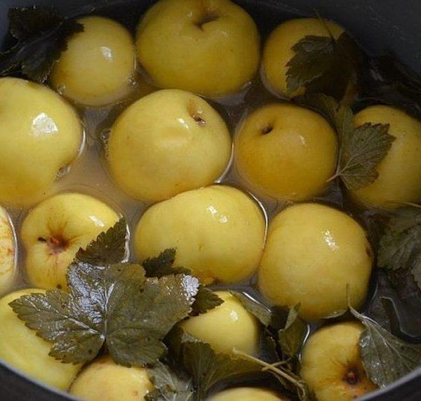 яблоки моченые бочковые