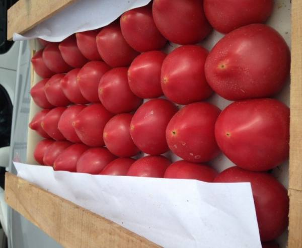ящик помидоров азербайждан