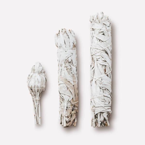 Калифорнийский белый шалфей Extra large 25см