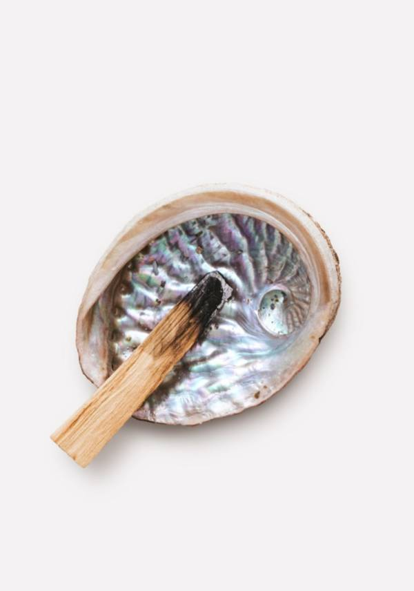Морская раковина Абалон перламутр