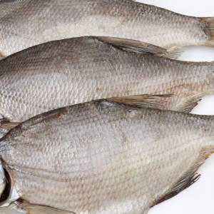 рыбец цимлянский