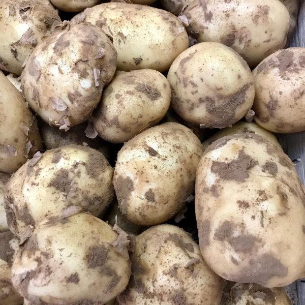 картофель молодой астрахань