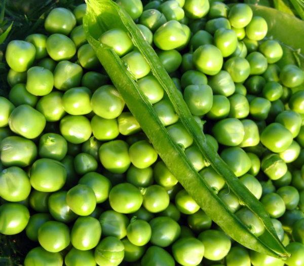 зеленый горошек молодой стручки